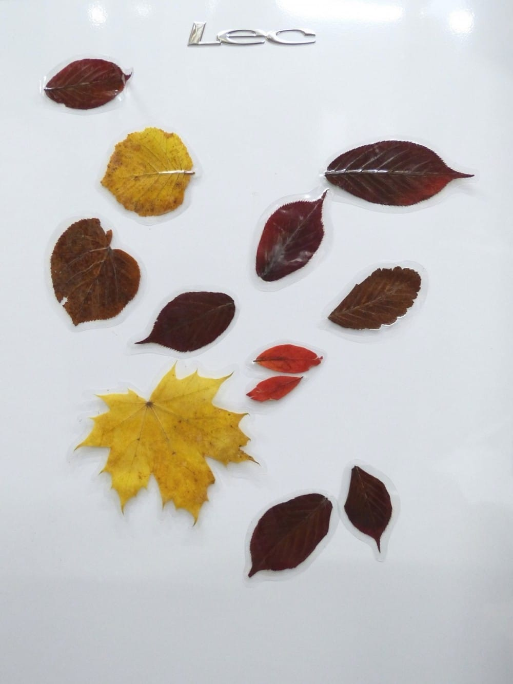 Autumn Leaves and fridge magnets